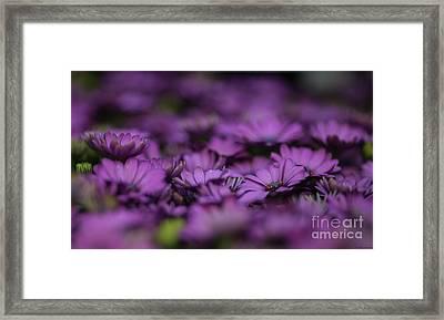 Purple Mood Framed Print