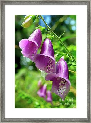 Purple Pink Passion Framed Print by Terry Elniski