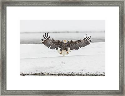 Putting On The Brakes Framed Print