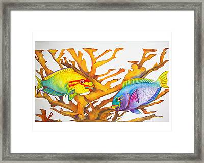 Queen Parrotfish And Elkhorn Coral Framed Print