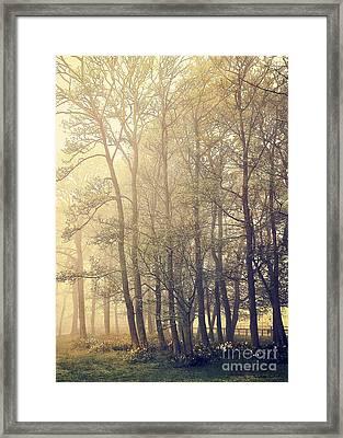 Quiet Morning Framed Print by Svetlana Sewell