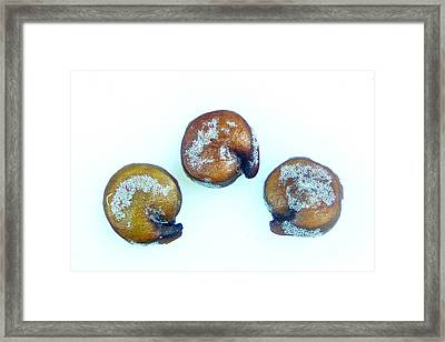 Quinoa Seeds With Saponins On Their Framed Print