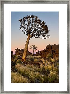 Quiver Tree Aloe Dichotoma, Quiver Tree Framed Print