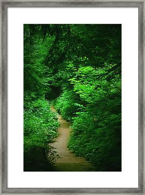 Rain Forest Walk Framed Print