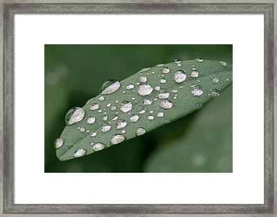 Rain On A Leaf Framed Print