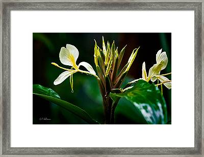Rain Refreshed Framed Print by Christopher Holmes