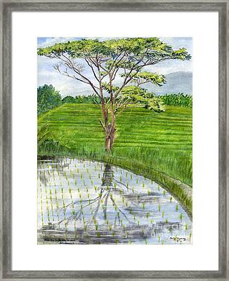 Framed Print featuring the painting Rain Tree On The Way To Ubud Bali Indonesia by Melly Terpening