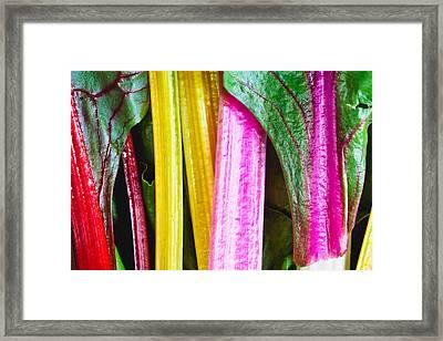 Rainbow Chard Framed Print by Tom Gowanlock