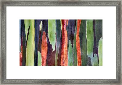 Framed Print featuring the photograph Rainbow Eucalyptus by Susan Rissi Tregoning