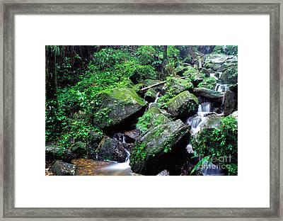 Rainforest Waterfall Framed Print by Thomas R Fletcher