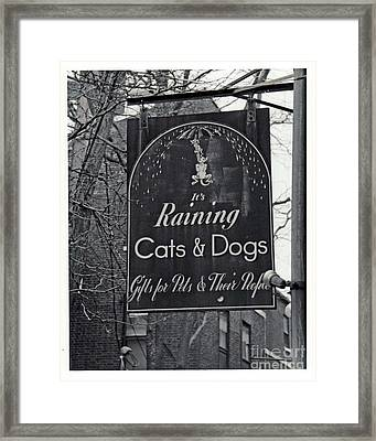 Framed Print featuring the photograph Raining Cats And Dogs by Juls Adams