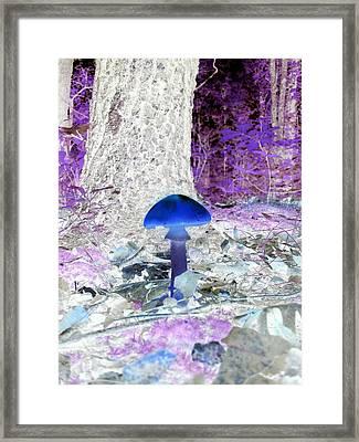 Rainy July Mushrooms In The Ozarks Framed Print by Catherine McCoy