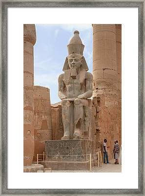 Framed Print featuring the photograph Rameses by Silvia Bruno
