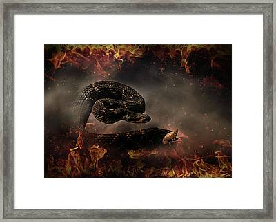 Rattle Snake Framed Print by Stephanie Laird