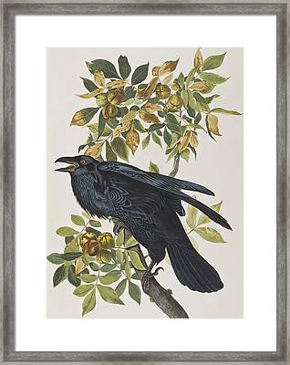 Raven Framed Print by John James Audubon
