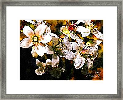 Reaching For The Stars Framed Print by Steve Warnstaff