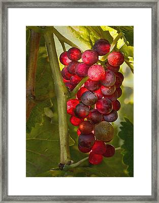 Ready For Harvest Framed Print by Sharon Foster