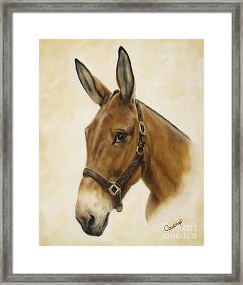 Ready Mule Framed Print by Cathy Cleveland