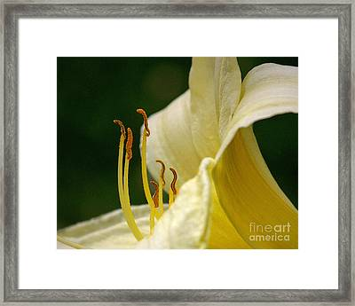 Ready To March Framed Print by Sue Stefanowicz