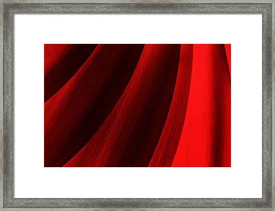 Red Chrysanthemum Dawn Rising Framed Print