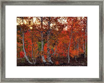 Red Aspens Framed Print by Leland D Howard
