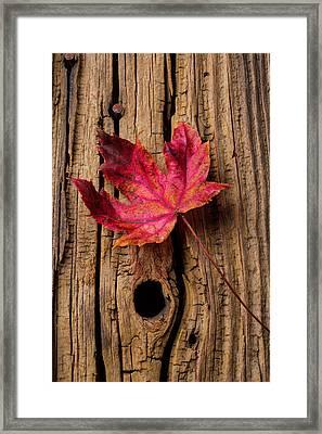 Red Autumn Leaf Framed Print