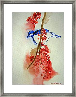 Red Berry Blue Bird Framed Print by Patricia Arroyo