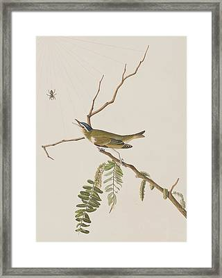 Red Eyed Vireo Framed Print by John James Audubon