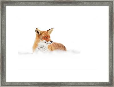 Red Fox In The White Snow Framed Print