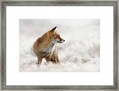 Red Fox, White World Framed Print by Roeselien Raimond