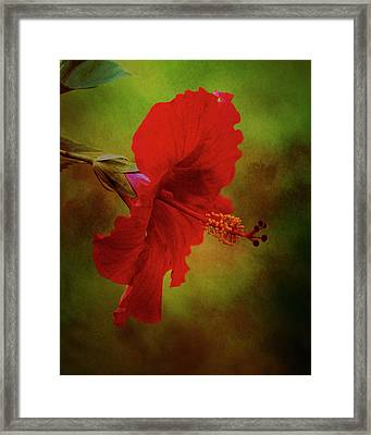 Red Hibiscus Art Framed Print