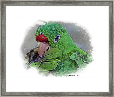Red Lored Parrot Framed Print
