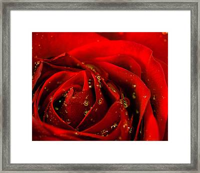 Red Rose 2 Framed Print