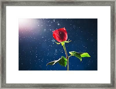 Red Rose On Snow Background Framed Print by Valentin Valkov