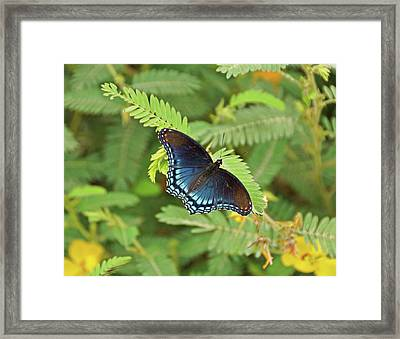 Framed Print featuring the photograph Red Spotted Purple Butterfly by Sandy Keeton