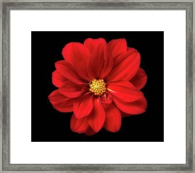Red Summer Memory 2 Framed Print by Johanna Hurmerinta