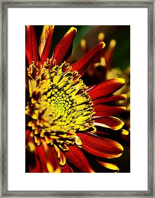 Red Framed Print by Svetlana Sewell