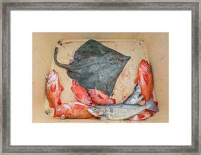 Redfish, Skate And Trout Freshly Framed Print by Panoramic Images