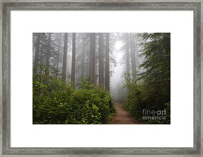 Redwood Grove Framed Print