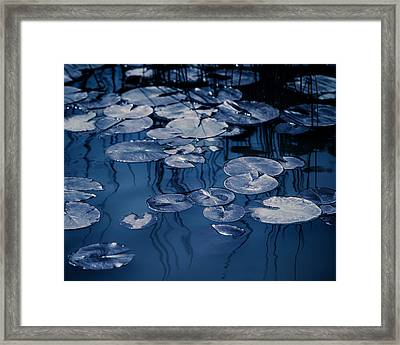Reeds And Pads 2 Framed Print by Rebecca Cozart