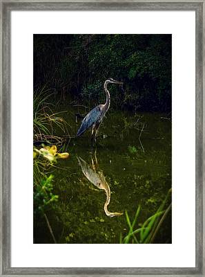 Framed Print featuring the photograph Reflect. by Kendall McKernon