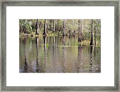 Reflection Of Cypress Trees Framed Print