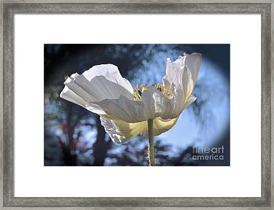 Reflection Yellow On White Framed Print by Debby Pueschel