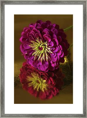 Reflections Framed Print by Don Spenner