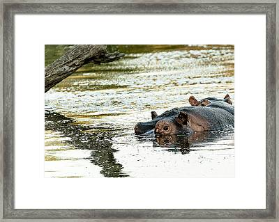 Reflections Framed Print by Patrick Kain