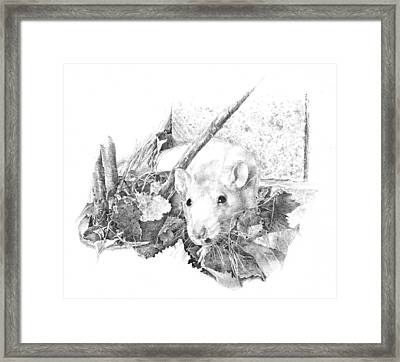 Reggie The Rat Framed Print by Judith Angell Meyer