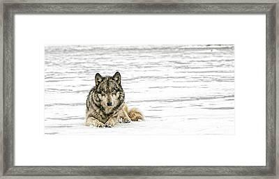 Relaxed Framed Print by Shari Jardina