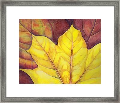 Releaf Framed Print by Amy Tyler