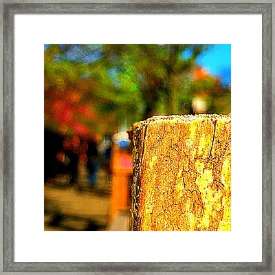 Relic Framed Print by Mike Norkin