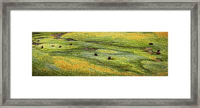 Renaissance Cave Bison Framed Print
